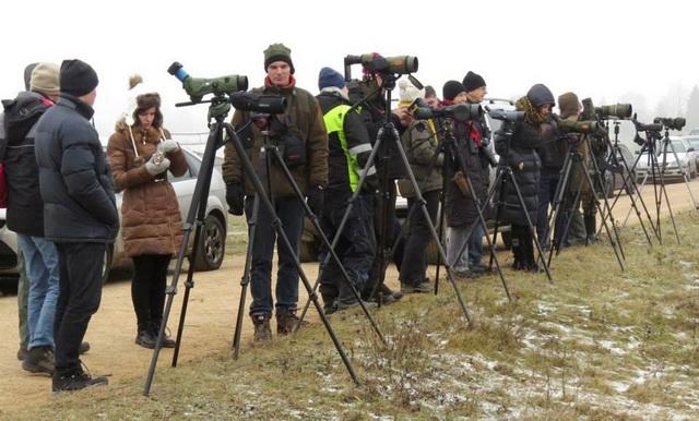 Baltosios pelėdos (Bubo scandiacus) stebėjimas Kauno rajone 2014 m. gruodžio mėn.